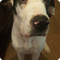 Adopt A Pet :: Lilly - Stevens Point, WI