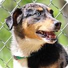 Adopt A Pet :: Gio