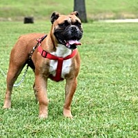 Adopt A Pet :: BELLA MIA - Norfolk, VA