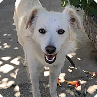 Adopt A Pet :: LOGAN - Modesto, CA