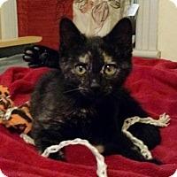 Adopt A Pet :: Sheba(PT) - Trenton, NJ