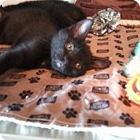 Adopt A Pet :: Gemma - Loxahatchee, FL