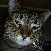 Adopt A Pet :: Astro - Hamburg, NY