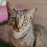 Adopt A Pet :: Noah - Statesville, NC