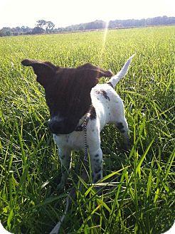 Terrier (Unknown Type, Medium) Mix Puppy for adoption in Holland, Michigan - Stella