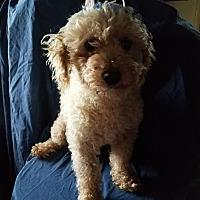 Adopt A Pet :: Jethro - Quentin, PA