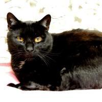 Adopt A Pet :: Onyx - Westville, IN