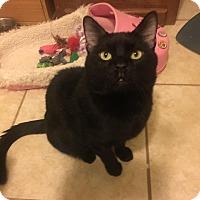 Adopt A Pet :: Nigel - Chicago, IL