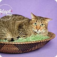 Adopt A Pet :: Gavyn - Pearland, TX