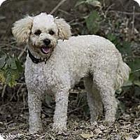 Adopt A Pet :: Sophie - Calgary, AB