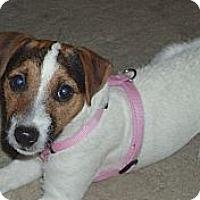 Adopt A Pet :: CLEO - Scottsdale, AZ