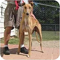 Adopt A Pet :: BB - Oak Ridge, NC