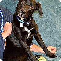 Adopt A Pet :: Oreo - Hagerstown, MD