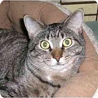 Adopt A Pet :: Peter Czech - Lombard, IL