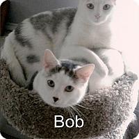 Adopt A Pet :: Bob - Medway, MA