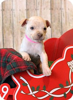 Boxer Mix Puppy for adoption in Waldorf, Maryland - Beatrice