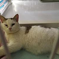 Adopt A Pet :: Hazel - Flint HIll, VA