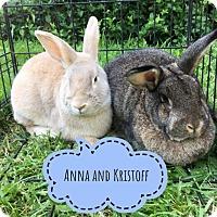 Adopt A Pet :: Kristoff - Elizabethtown, KY