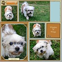 Adopt A Pet :: Miss Molly - Loma Linda, CA