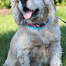 Adopt A Pet :: Theodore