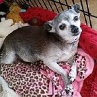 Adopt A Pet :: Peanut - Mesa, AZ