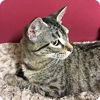 Adopt A Pet :: Kohana - Redding, CA