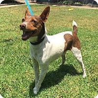 Adopt A Pet :: Bungee - San Diego, CA