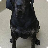Adopt A Pet :: Winston - Lebanon, ME