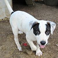 Adopt A Pet :: Cypress - Godley, TX