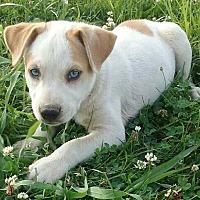 Adopt A Pet :: Gretal - Oswego, IL