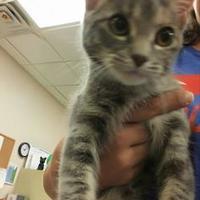 Adopt A Pet :: Stray Cat 582 - Fond du Lac, WI