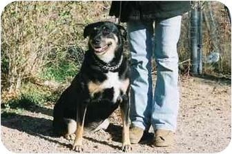 German Shepherd Dog/Rottweiler Mix Dog for adoption in California City, California - Dutchess
