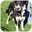 Photo 2 - Husky Mix Dog for adoption in Somerset, Pennsylvania - Steele