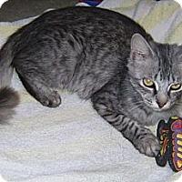 Adopt A Pet :: Kenia - Delray Beach, FL