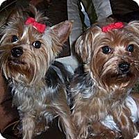 Adopt A Pet :: Hallie - Goodyear, AZ