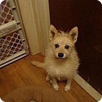 Adopt A Pet :: Jordon *(ADOPTION FEE PAID) - Leesport, PA