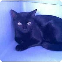 Adopt A Pet :: Bella - Fort Lauderdale, FL
