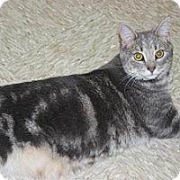Adopt A Pet :: Ed! - Secaucus, NJ
