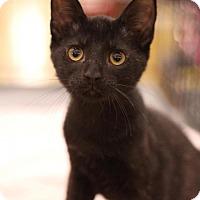 Adopt A Pet :: Robin - Sacramento, CA