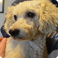 Adopt A Pet :: Ezra - Prole, IA