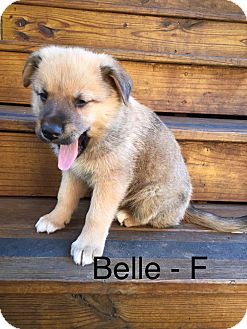 Shepherd (Unknown Type)/Husky Mix Puppy for adoption in Media, Pennsylvania - Belle **Holiday Puppy**
