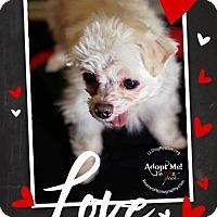 Adopt A Pet :: Dakota - Shawnee Mission, KS