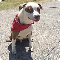 Adopt A Pet :: Obie - Staunton, VA