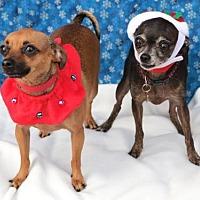 Adopt A Pet :: Lester & Princess Peach - Tustin, CA