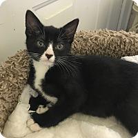 Adopt A Pet :: Lana - Dalton, GA