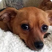 Adopt A Pet :: Peanut - Antioch, CA