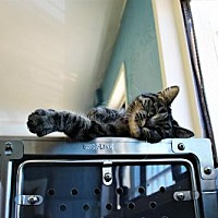 Adopt A Pet :: Snooky Jantz - Denver, CO