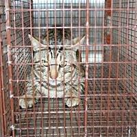 Adopt A Pet :: GRIFFEN - Aurora, IL