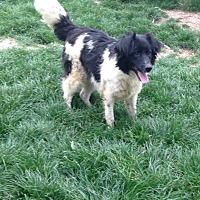 Adopt A Pet :: Jimmi - Pickering, ON