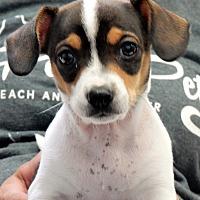 Adopt A Pet :: Maya - Long Beach, NY